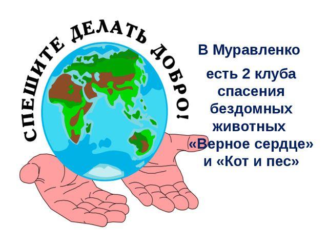 В Муравленко есть 2 клуба спасения бездомных животных «Верное сердце» и «Кот...