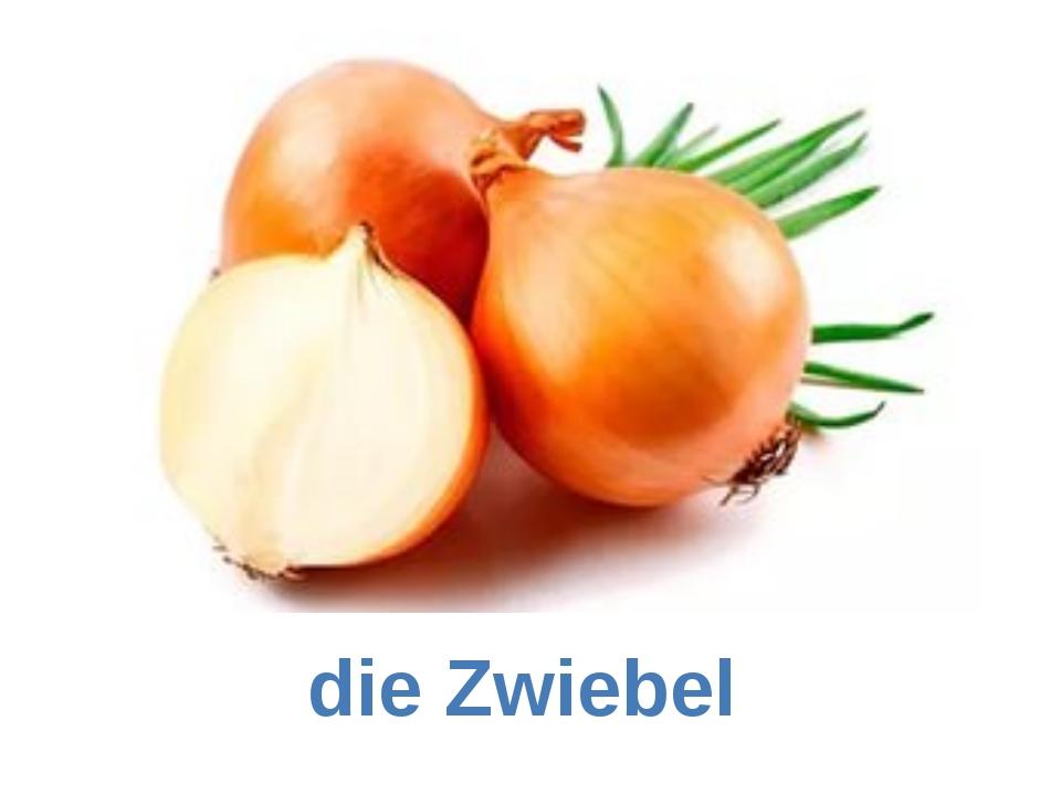 die Zwiebel
