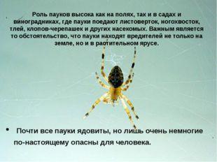 Роль пауков высока как на полях, так и в садах и виноградниках, где пауки пое