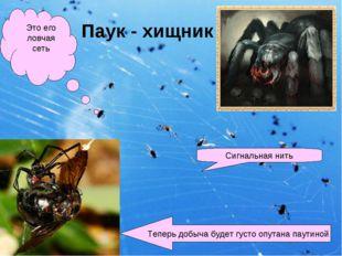 Паук - хищник Это его ловчая сеть Сигнальная нить Теперь добыча будет густо о