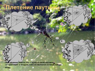 Плетение паутины Паук начинает плести сеть с единственной паутинки, которая п
