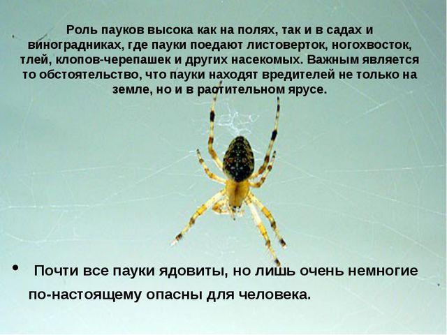Роль пауков высока как на полях, так и в садах и виноградниках, где пауки пое...