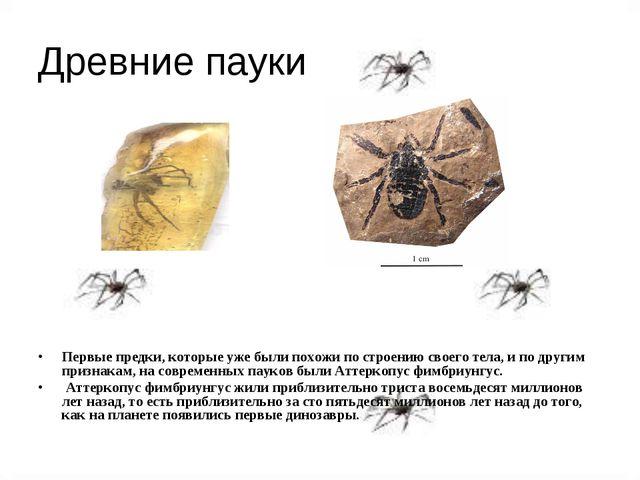 Древние пауки Первые предки, которые уже были похожи по строению своего тела,...