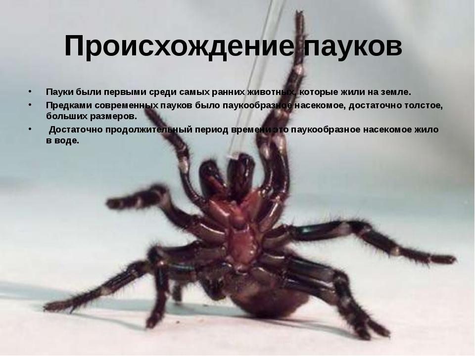 Происхождение пауков Пауки были первыми среди самых ранних животных, которые...