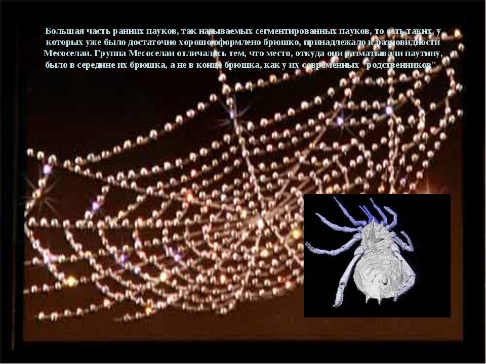 Большая часть ранних пауков, так называемых сегментированных пауков, то есть...