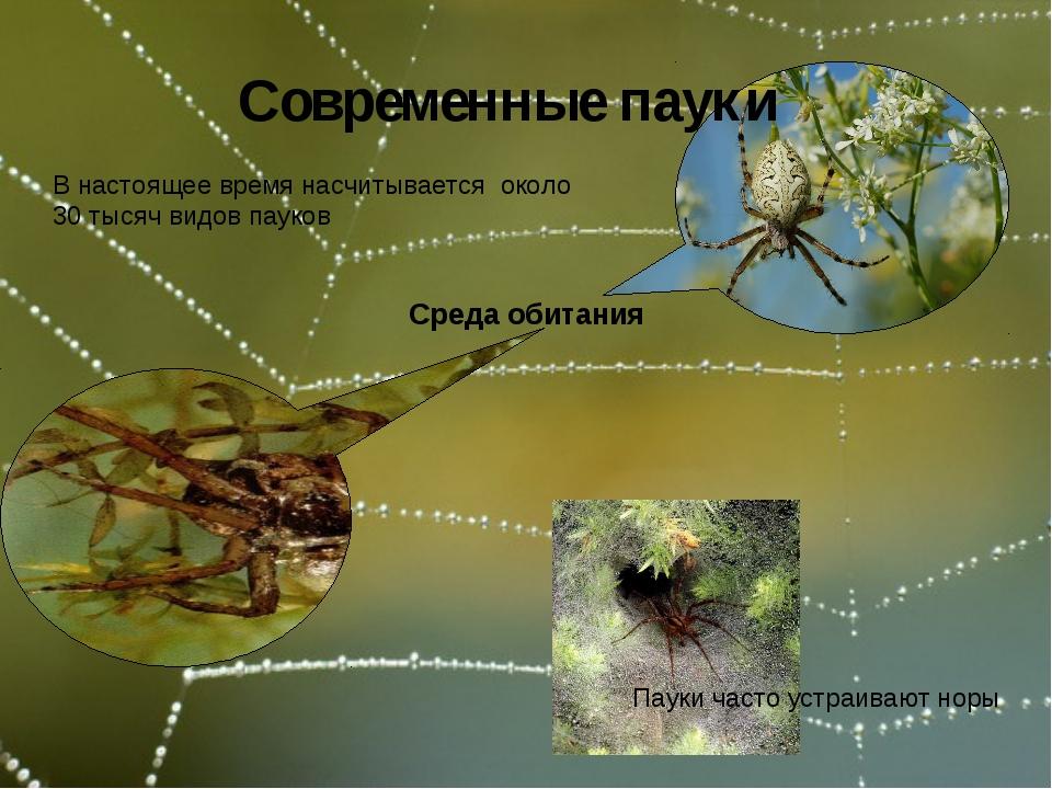 Среда обитания Современные пауки В настоящее время насчитывается около 30 ты...