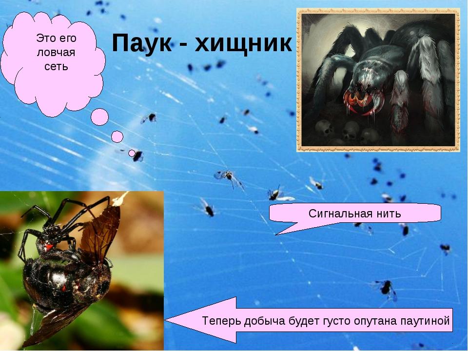 Паук - хищник Это его ловчая сеть Сигнальная нить Теперь добыча будет густо о...