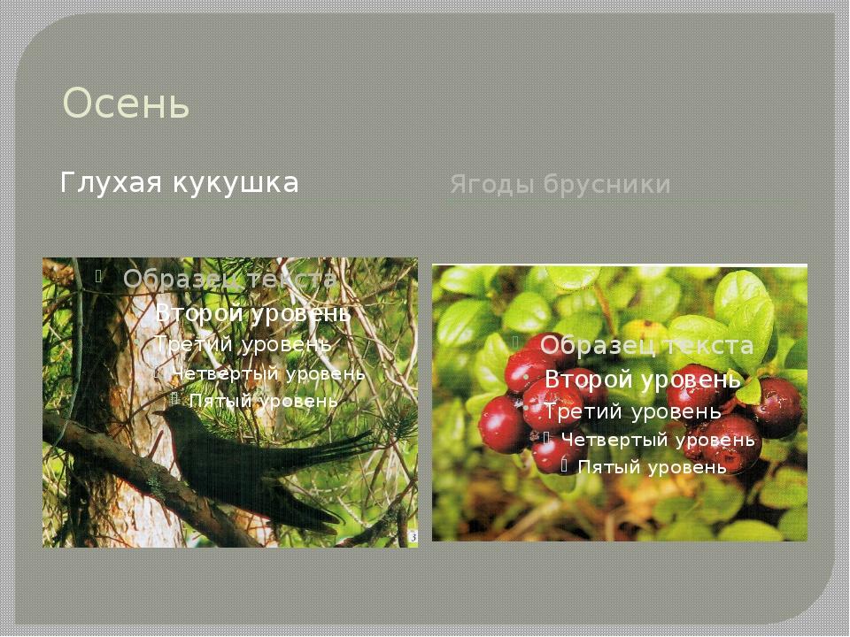 Осень Глухая кукушка Ягоды брусники