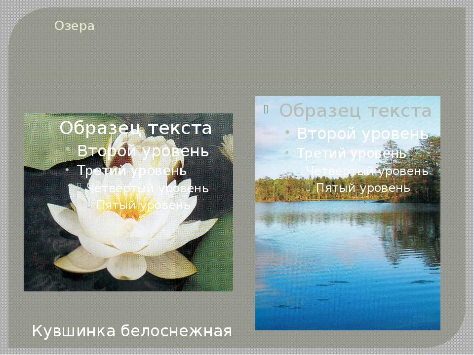 Озера Кувшинка белоснежная