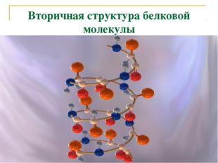 Вторичная структура белковой молекулы