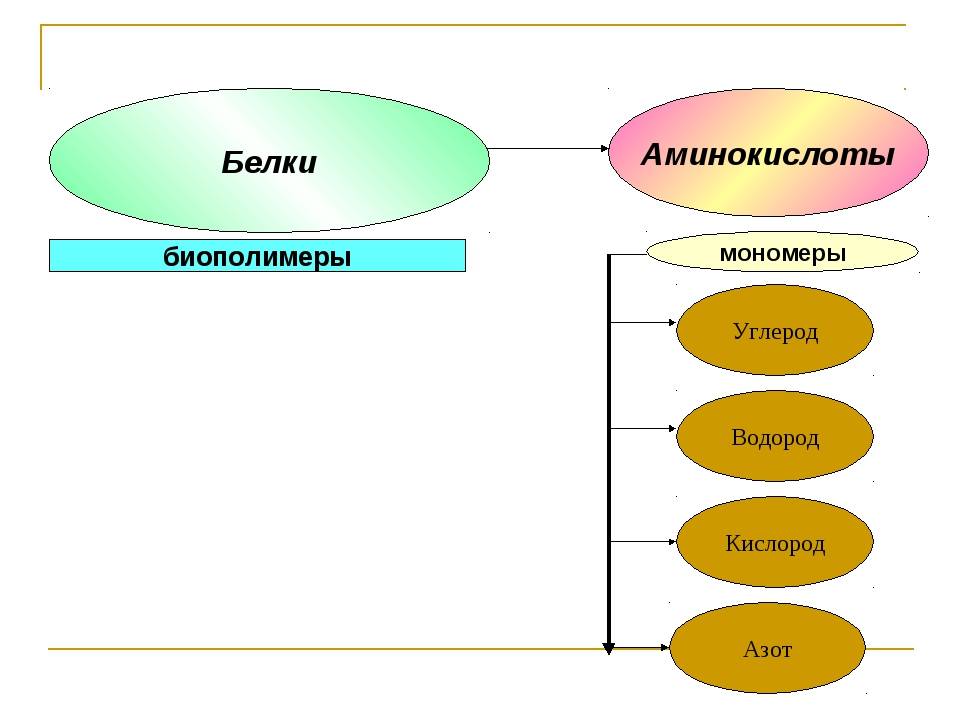 мономеры Аминокислоты биополимеры Белки Углерод Водород Азот Кислород