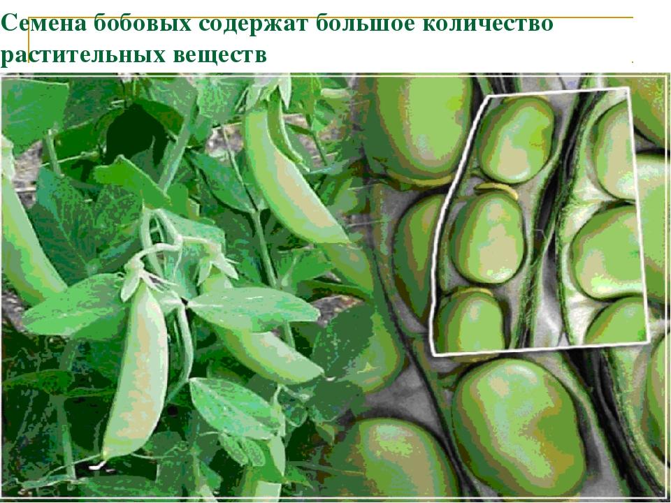 Семена бобовых содержат большое количество растительных веществ