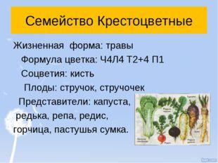 Семейство Крестоцветные Жизненная форма: травы Формула цветка: Ч4Л4 Т2+4 П1 С