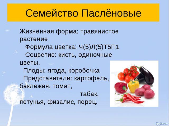 Семейство Паслёновые Жизненная форма: травянистое растение Формула цветка: Ч(...