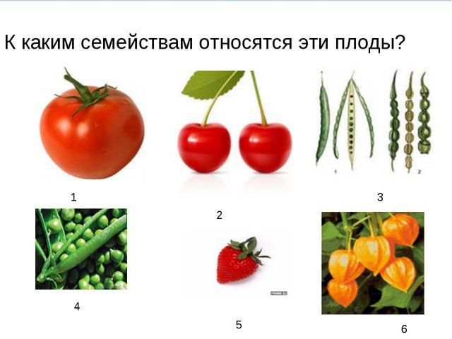 К каким семействам относятся эти плоды? 1 2 4 5 1 2 3 4 5 6