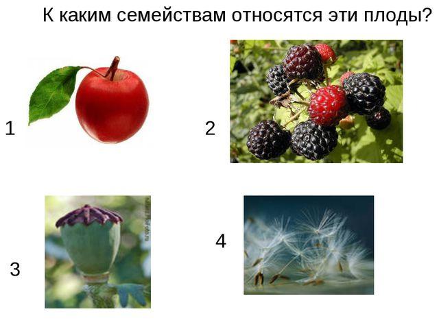 К каким семействам относятся эти плоды? 2 2 4 3