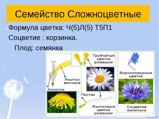 Семейство Сложноцветные Формула цветка: Ч(5)Л(5) Т5П1 Соцветие : корзинка. Пл...