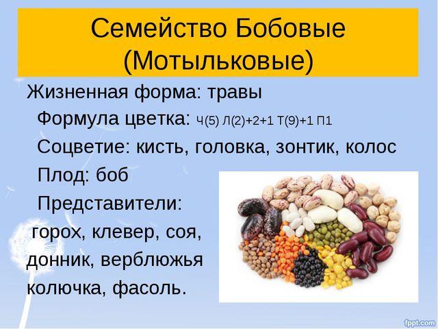 Семейство Бобовые (Мотыльковые) Жизненная форма: травы Формула цветка: Ч(5) Л...