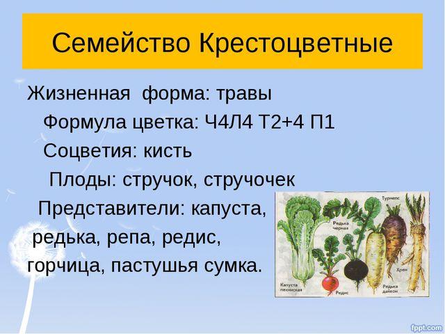 Семейство Крестоцветные Жизненная форма: травы Формула цветка: Ч4Л4 Т2+4 П1 С...