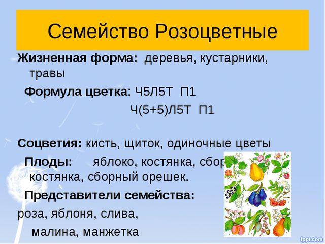 Семейство Розоцветные Жизненная форма: деревья, кустарники, травы Формула цве...