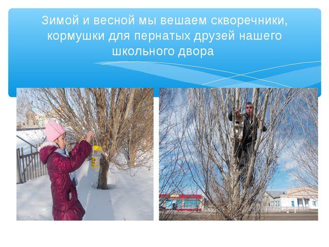 Зимой и весной мы вешаем скворечники, кормушки для пернатых друзей нашего шко...
