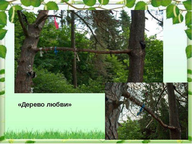 «Дерево любви»