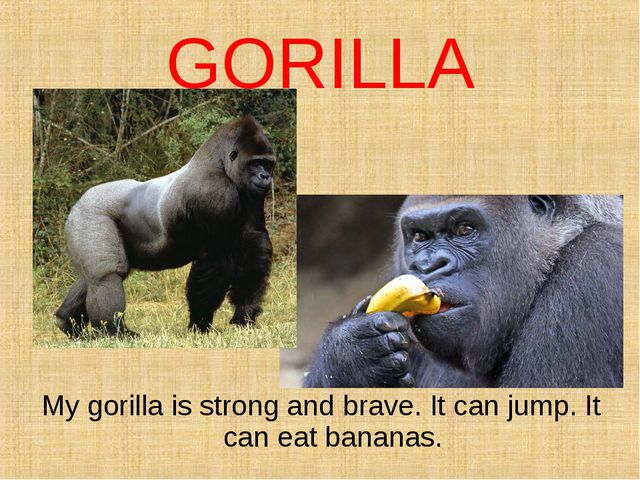 GORILLA My gorilla is strong and brave. It can jump. It can eat bananas.