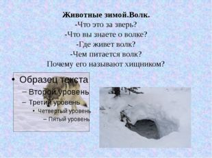 Животные зимой.Волк. -Что это за зверь? -Что вы знаете о волке? -Где живет во