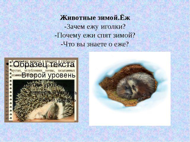Животные зимой.Ёж -Зачем ежу иголки? -Почему ежи спят зимой? -Что вы знаете о...