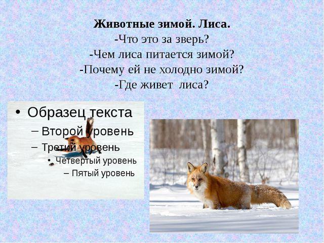 Животные зимой. Лиса. -Что это за зверь? -Чем лиса питается зимой? -Почему ей...