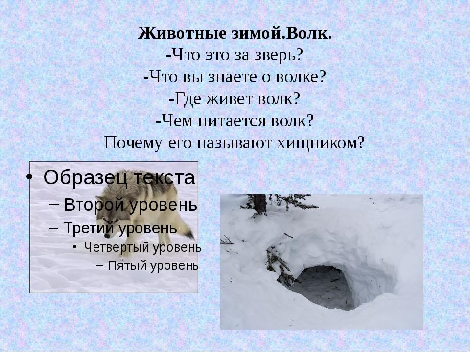 Животные зимой.Волк. -Что это за зверь? -Что вы знаете о волке? -Где живет во...