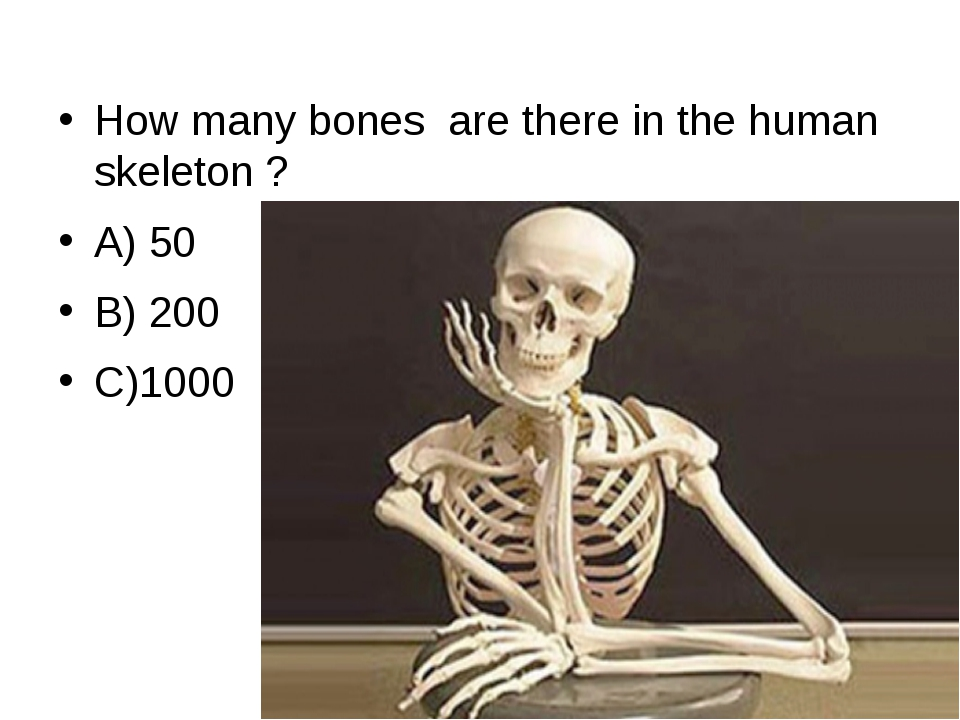 How many bones  are there in the human skeleton ?