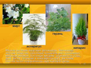 * Многие растения выделяют фитонциды. Фитонциды – летучие вещества, способные