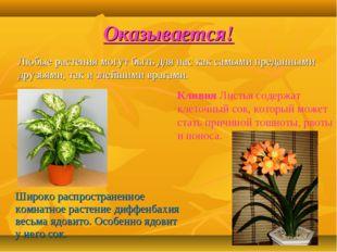 Любые растения могут быть для нас как самыми преданными друзьями, так и злейш