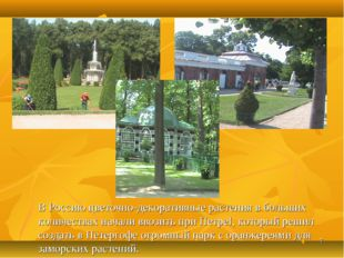 * В Россию цветочно-декоративные растения в больших количествах начали ввозит