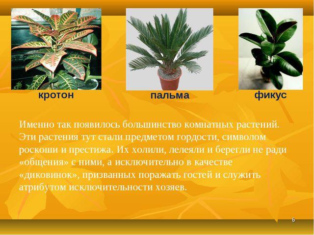 * Именно так появилось большинство комнатных растений. Эти растения тут стали...