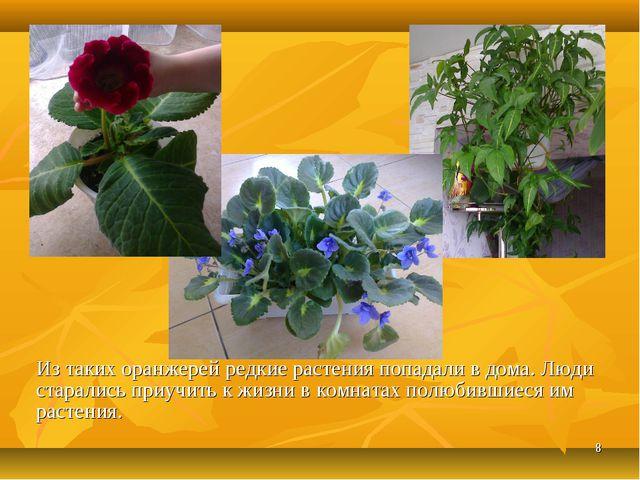 * Из таких оранжерей редкие растения попадали в дома. Люди старались приучить...