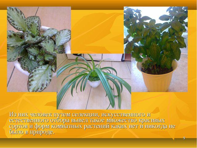 * Из них человек путем селекции, искусственного и естественного отбора вывел...