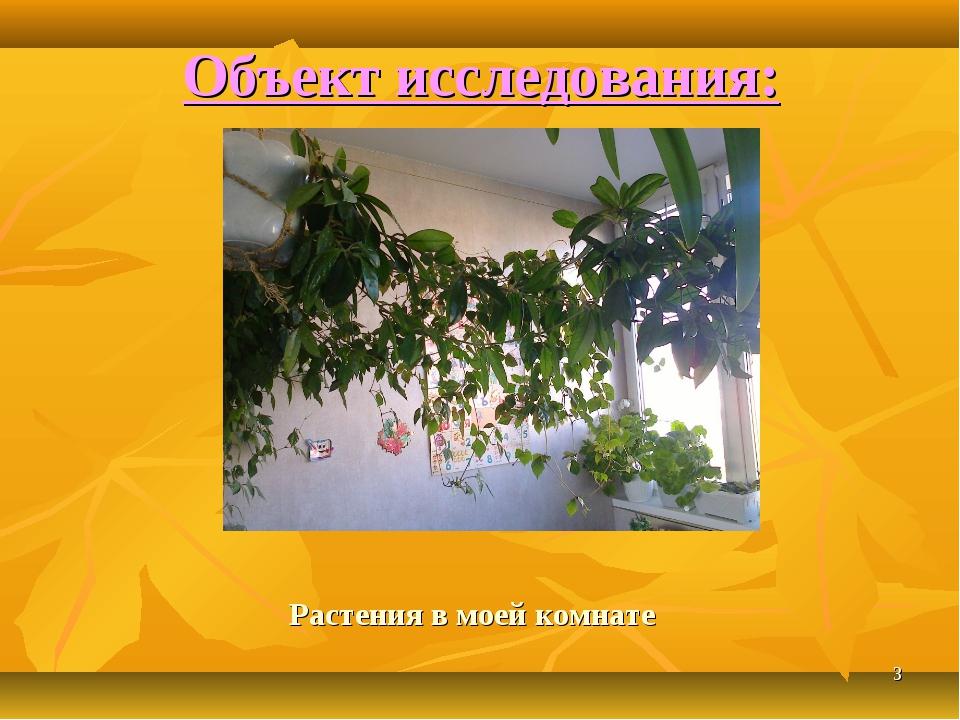 * Растения в моей комнате Объект исследования: