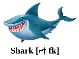 Shark [ʃɑːk]