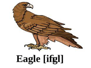 Eagle [iːgl]