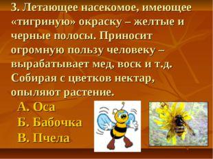 3. Летающее насекомое, имеющее «тигриную» окраску – желтые и черные полосы. П