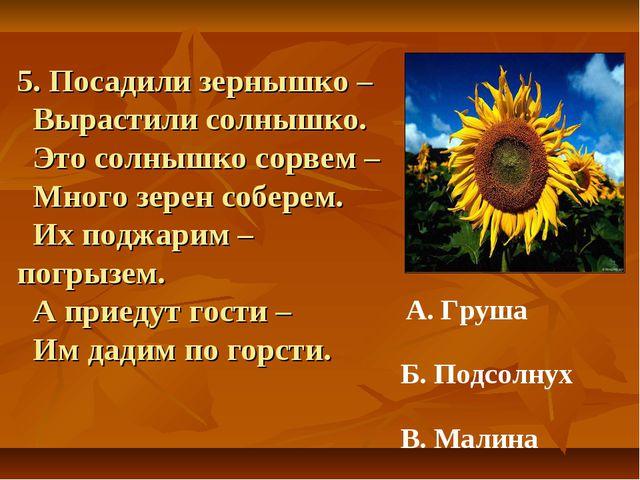 5. Посадили зернышко – Вырастили солнышко. Это солнышко сорвем – Много зерен...
