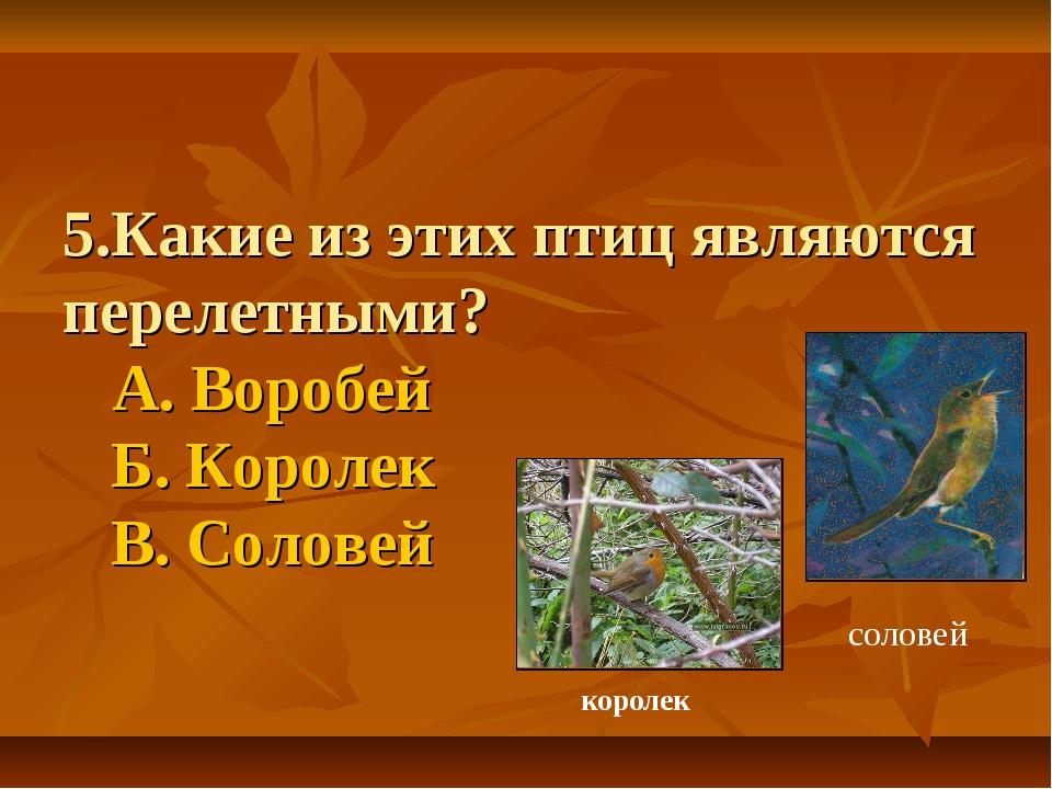 5.Какие из этих птиц являются перелетными? А. Воробей Б. Королек В. Соловей с...
