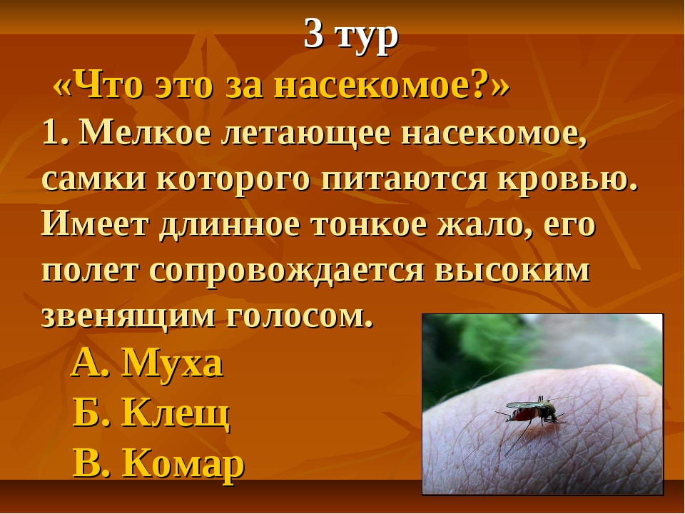 3 тур «Что это за насекомое?» 1. Мелкое летающее насекомое, самки которого п...