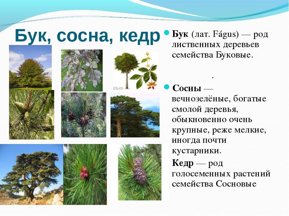 Полынь - многолетнее травянистое растение, относящееся к семейству сложноцвет