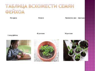 Посадила Взошло Принялось при пересадке 1 плод фейхоа 45 ростков 30 рост
