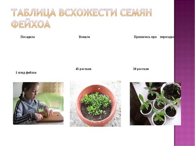 Посадила Взошло Принялось при пересадке 1 плод фейхоа 45 ростков 30 рост...