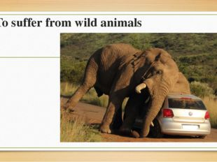 To suffer from wild animals