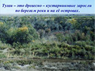. Тугаи – это древесно – кустарниковые заросли по берегам реки и на её остро